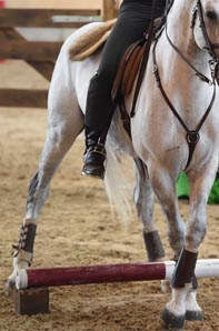 Horse Sports & Events